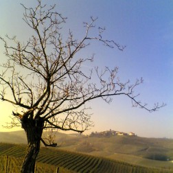 Panorama delle Colline del Monferrato