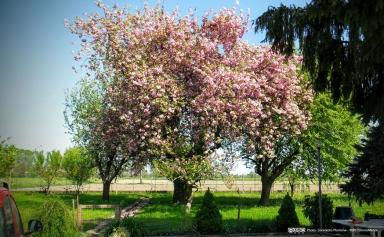 Villafranca Piemonte (Torino, Italy)
