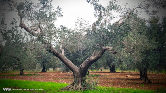 Oria (Taranto, Italy)