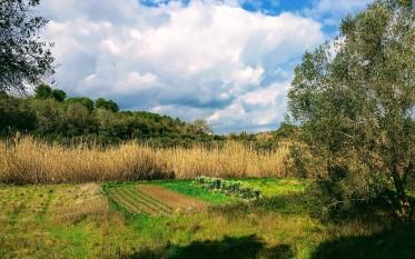 Cannizzi ed altra vegetazione